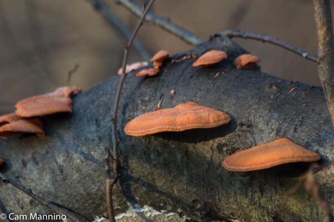 Orange mushroom closeup Draper