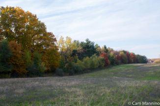 Trees along Draper Prairie on November 1