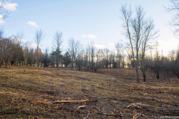 Cleared Hillside Watershed Ridge
