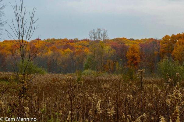 Fall at Bear Creek