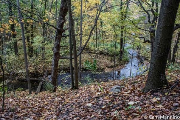 Stony Creek Ravine late autumn SCR