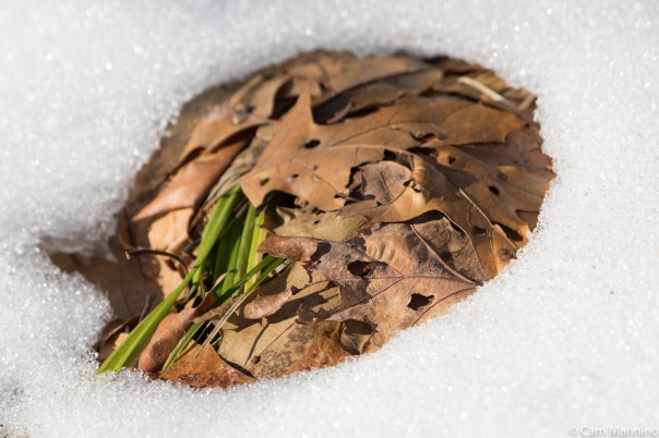 Leaf mandala in snow BC