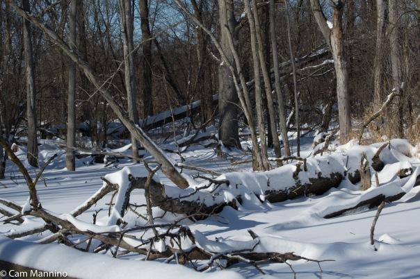 Log w snow Center Pond BC'
