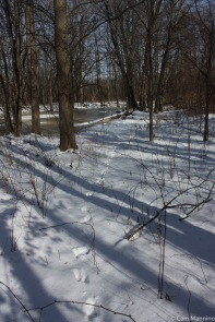 Deer tracks heading through the forest toward a frozen pool