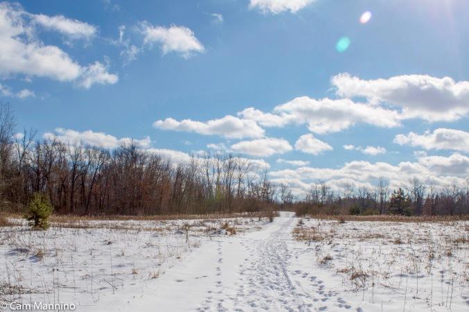meadow-cl-winter