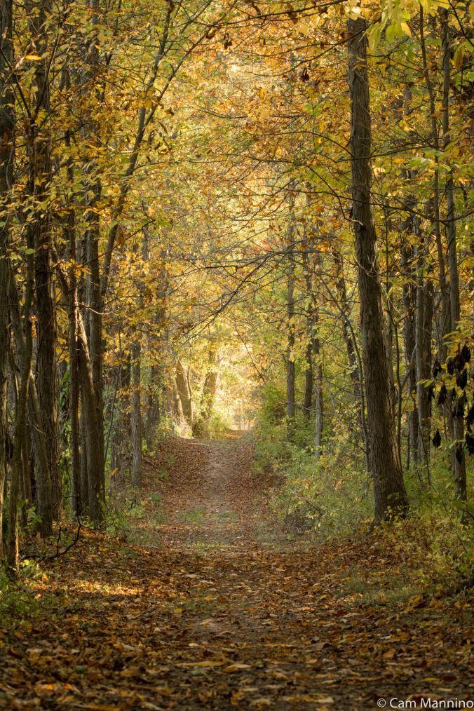 Hickory Lane autumn CL