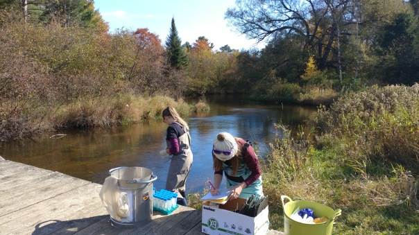 Emily Bovee and Kennedy Phillips studying New Zealand Mud Snails in the Au Sable River, photo by Jeremy Geist