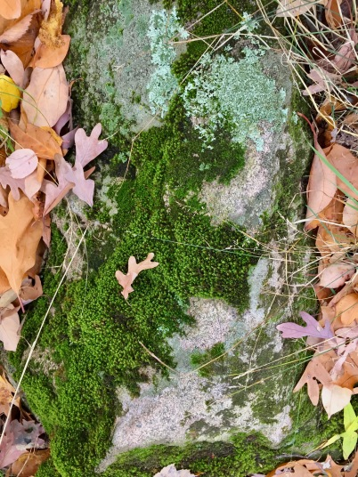 A stone patterned with mosses and lichen.